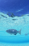 Maldivler HD LWP