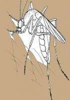 Sivrisinek Kovucu